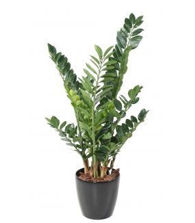 Zamia artificiel 110