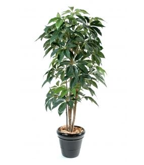 Schefflera artificiel AMATA