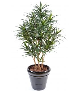 Dracaena artificiel ANITA