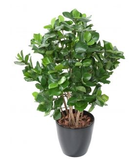CLUSIA Artificiel BUISSON