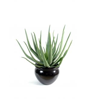 Aloevera artificielle