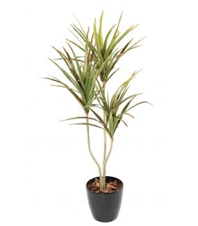 DRACAENA Artificiel