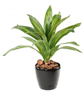 DRACAENA Artificiel LARGE