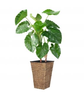 ALOCASIA Artificiel CALIDORA TB (130 cm)