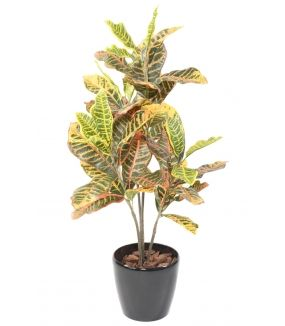 CROTON 100 Artificiel