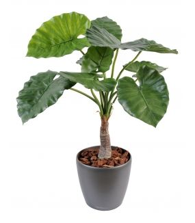 Alocasia artificiel calidora