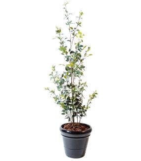 Ficus artificiel BUISSON PLAST