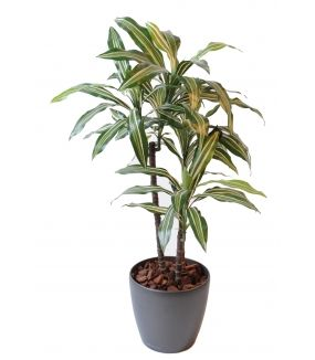 Dracaena artificiel FRAGRANS *3